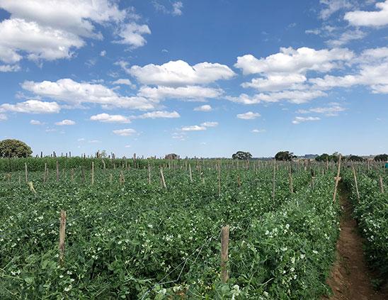 Cropmasters---Agribusiness-Consultancy-in-Kenya-5