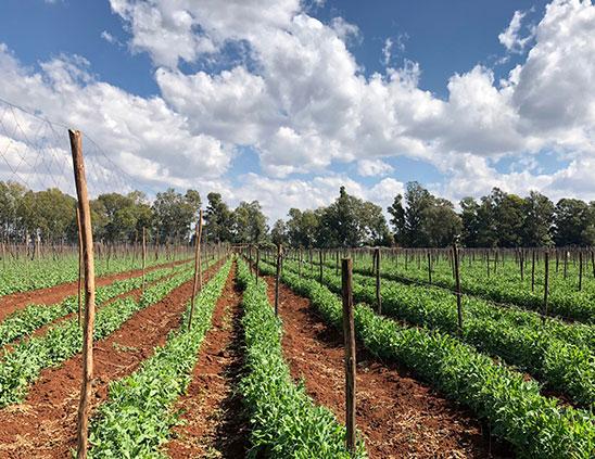 Cropmasters---Agribusiness-Consultancy-in-Kenya-6