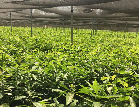 Cropmasters---Agribusiness-Consultancy-in-Kenya-8
